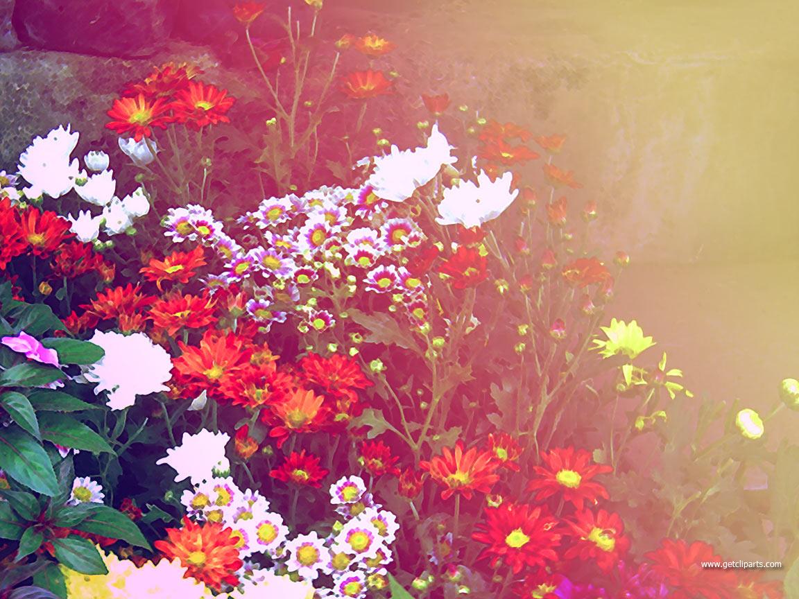 1152x864px Colorful Flower Wallpapers - WallpaperSafari