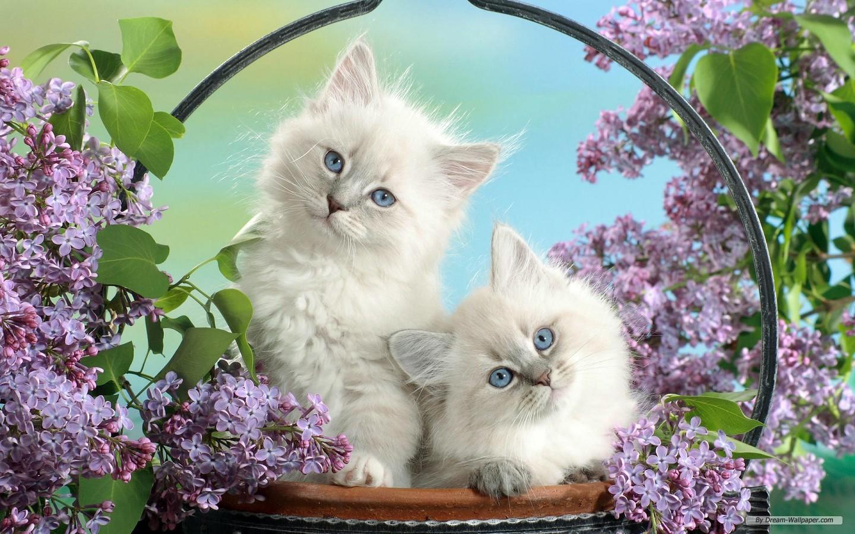 Cute Animal Desktop Backgrounds Desktop Image 1440x900