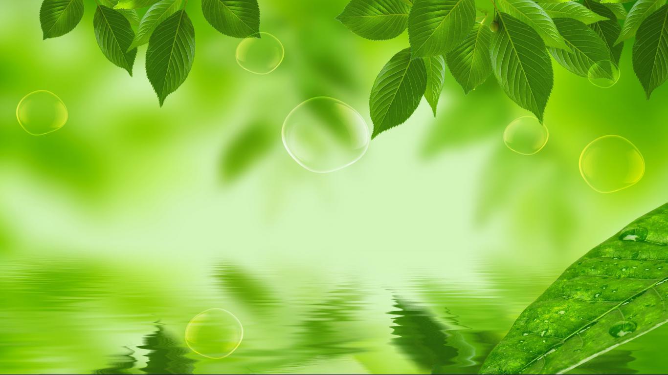 Leaf HD wallpaper 1366x768 30777 1366x768