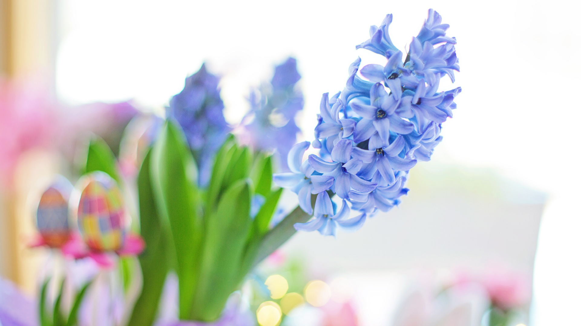 Easter 2020 Blue Hyacinth Flower Spring Wallpaper File HD 1920x1080