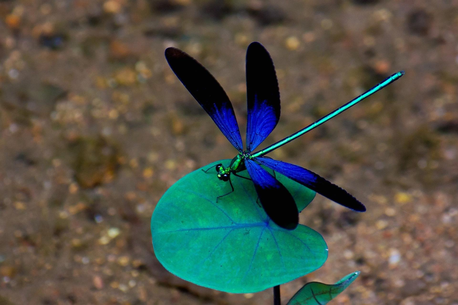 Pics Photos   Colorful Dragonfly Wallpaper 1920x1281