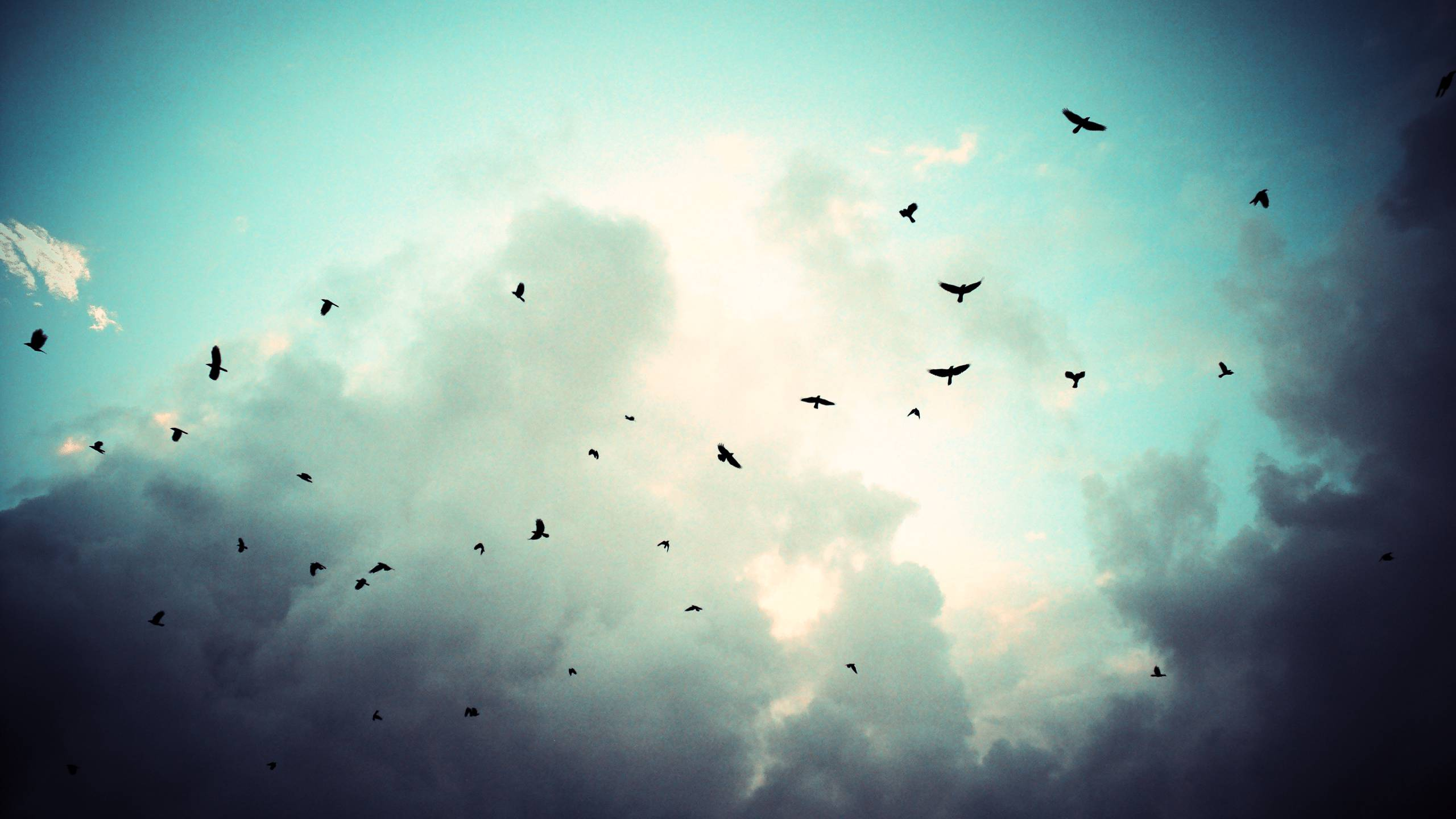 Flying Birds 7016776 2560x1440