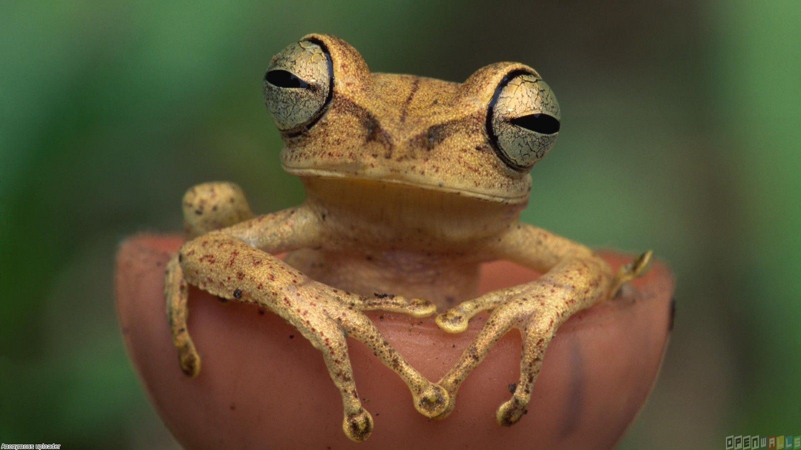 Cute frog wallpaper 17814   Open Walls 1600x900
