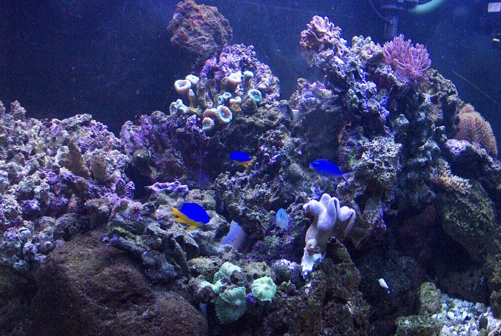 Related Pictures Coral Reef Live Wallpaper Mobile9 Car Pictures 1024x687
