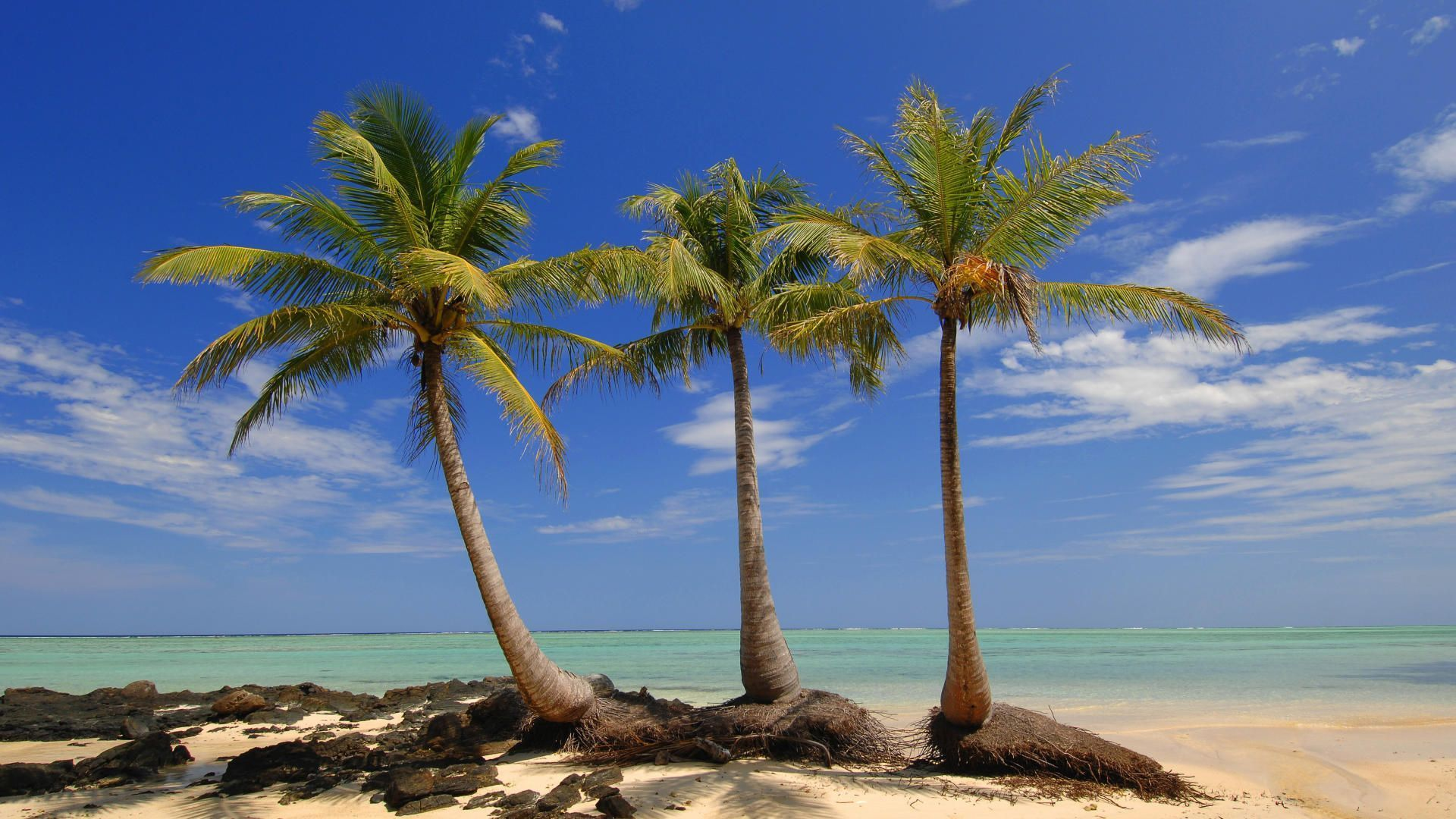 Palms Isl Madagascar Nature Background wallpapers HD   118394 1920x1080