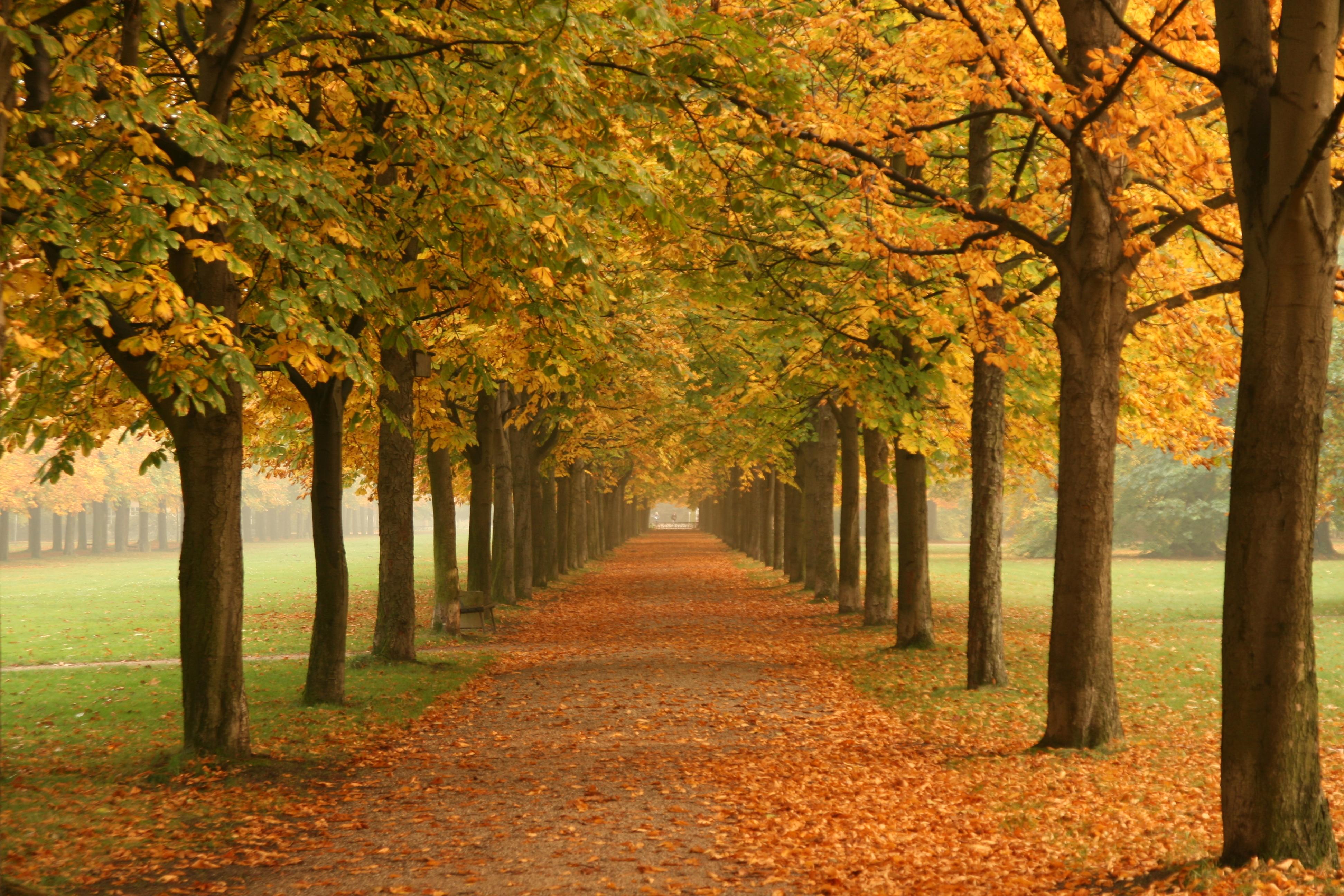 Description Autumn trees in Dresdenjpg 3888x2592
