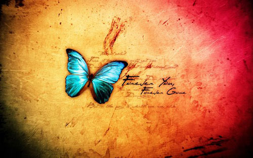 Vintage Touched Butterfly Wallpaper 500x313