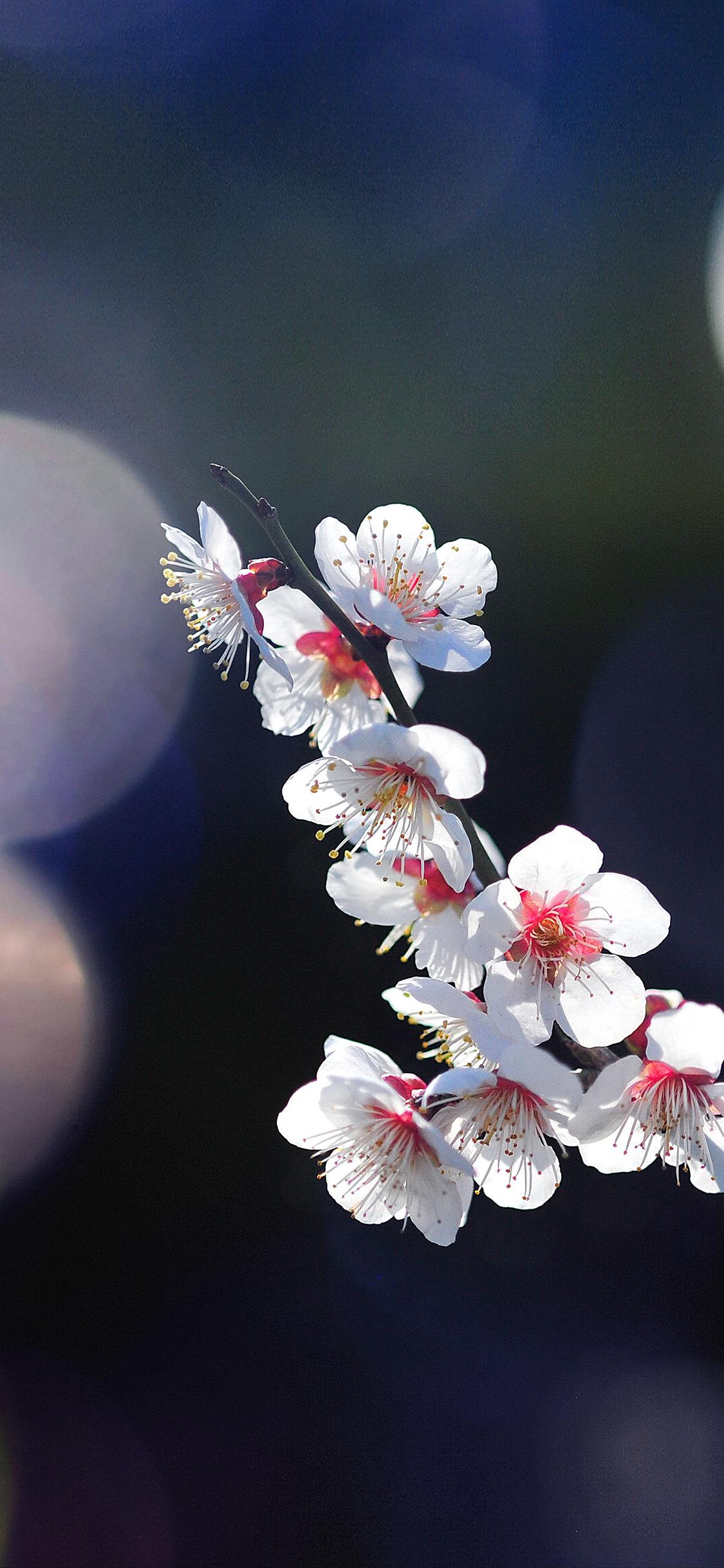 60 Wallpaper Flowers Images On Wallpapersafari