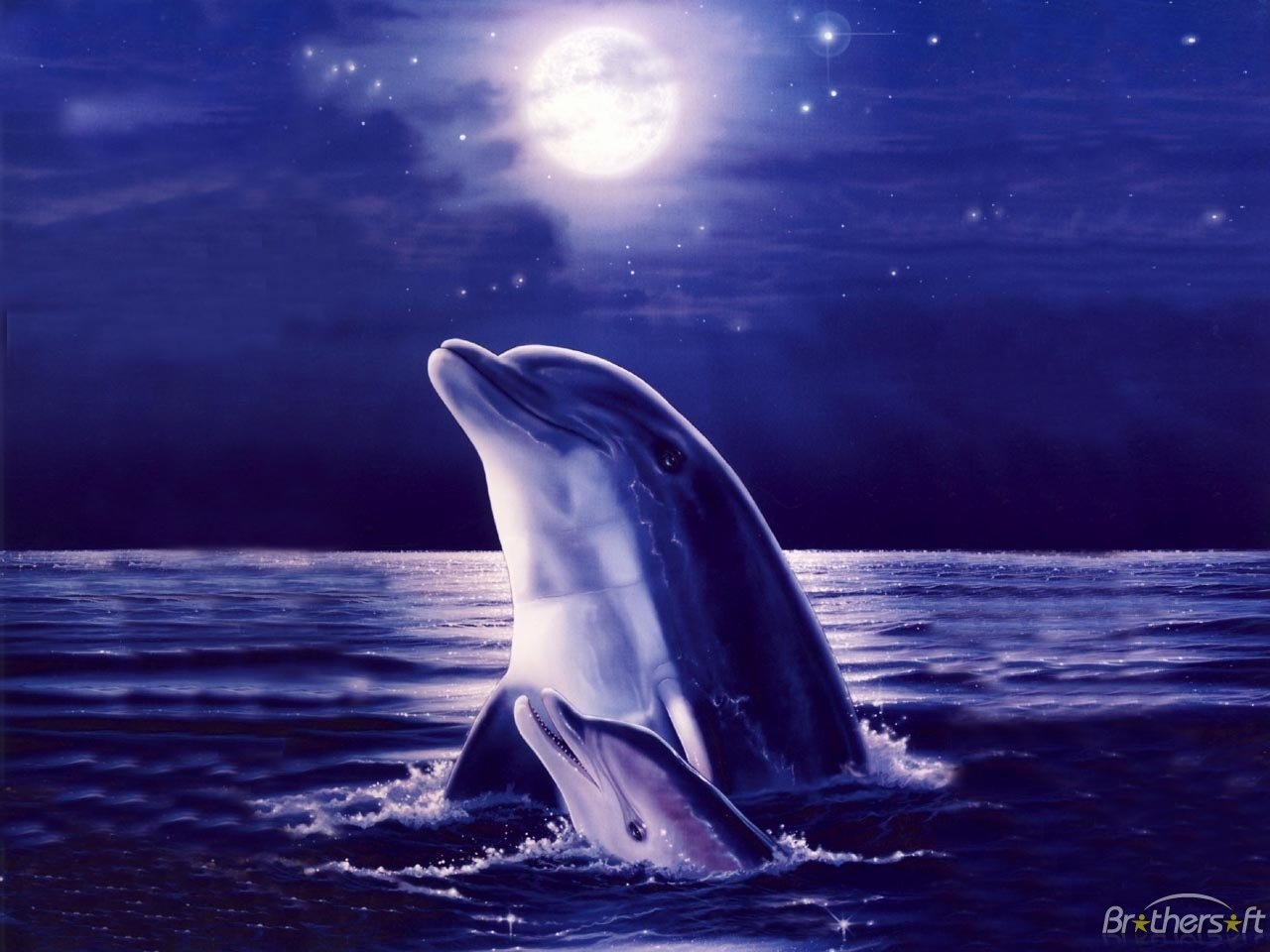 Download MOONLIGHT DOLPHINS WALLPAPER MOONLIGHT DOLPHINS 1280x960