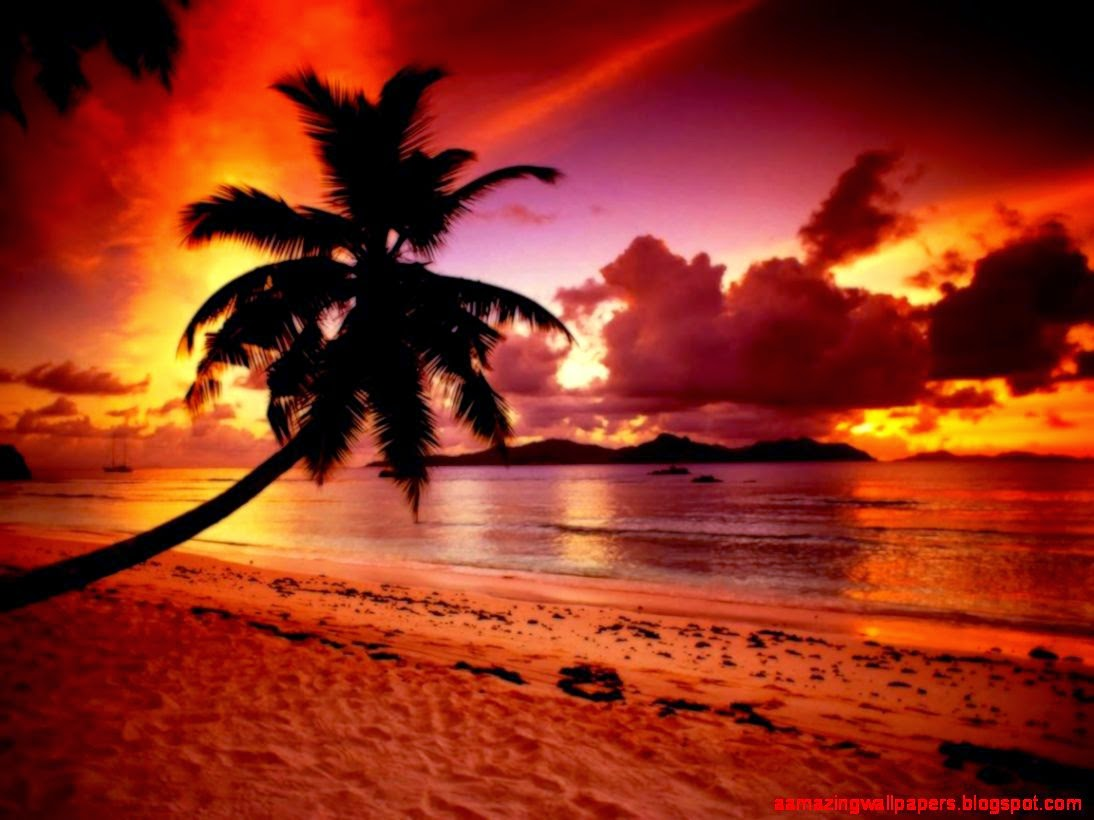 Beach Paradise Sunset Wallpaper Amazing Wallpapers 1094x820