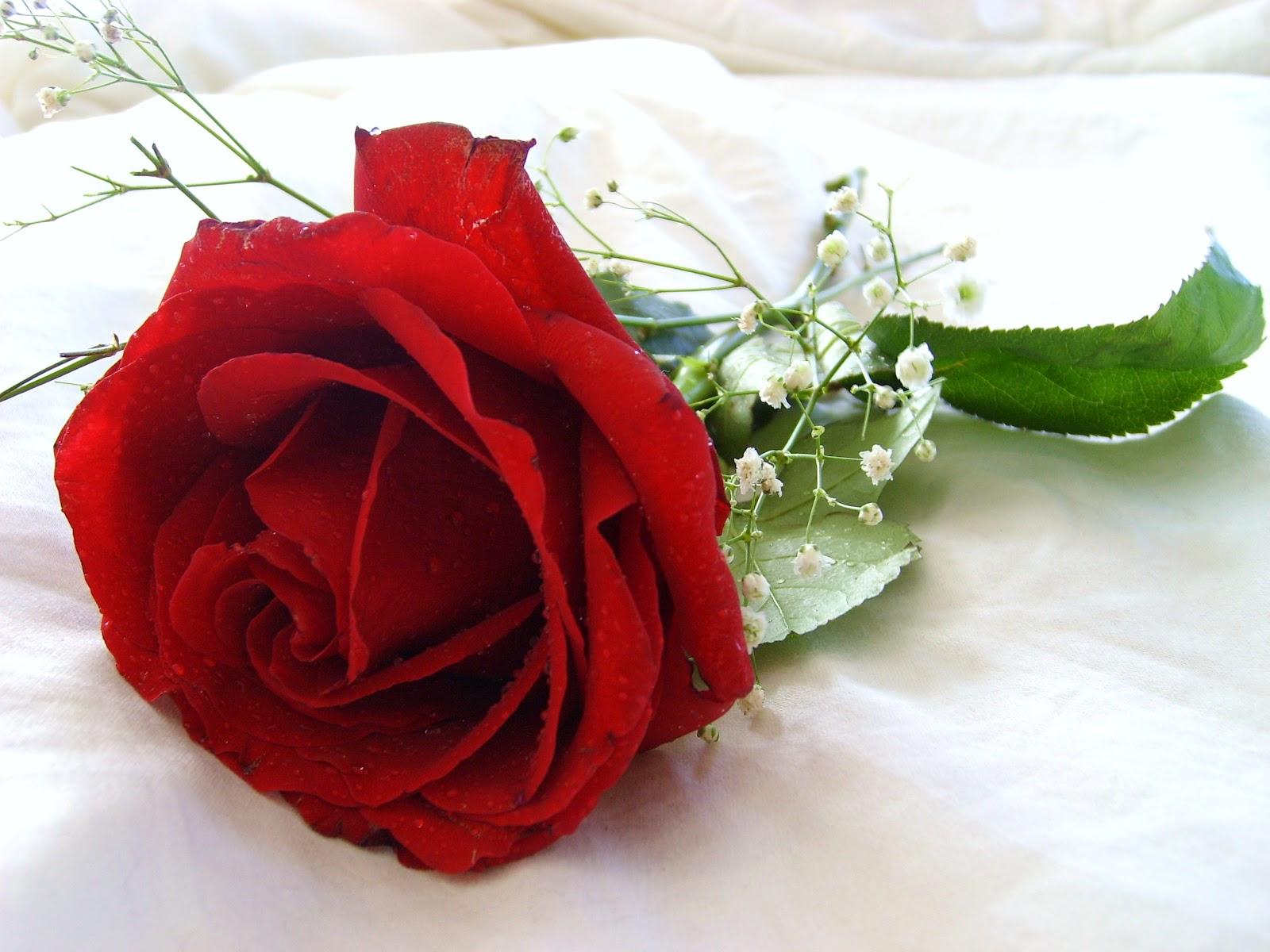 Beautiful Pictures Of Roses Wallpaper Wallpapersafari