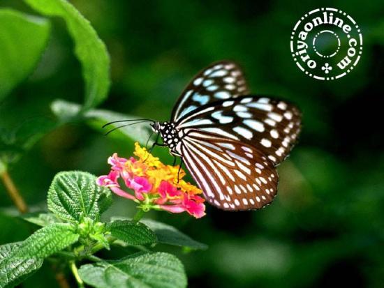 wallpapers butterflies wallpaper desktop nature and other 550x413