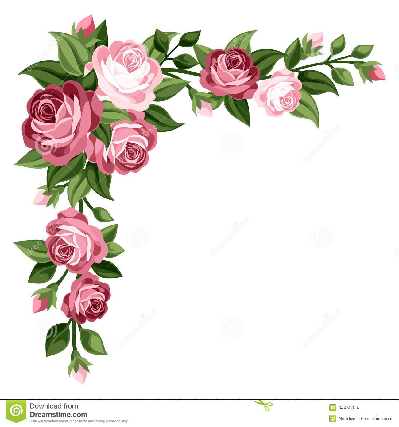 pink vintage roses rosebuds leaves corner rose buds green isolated 1300x1390