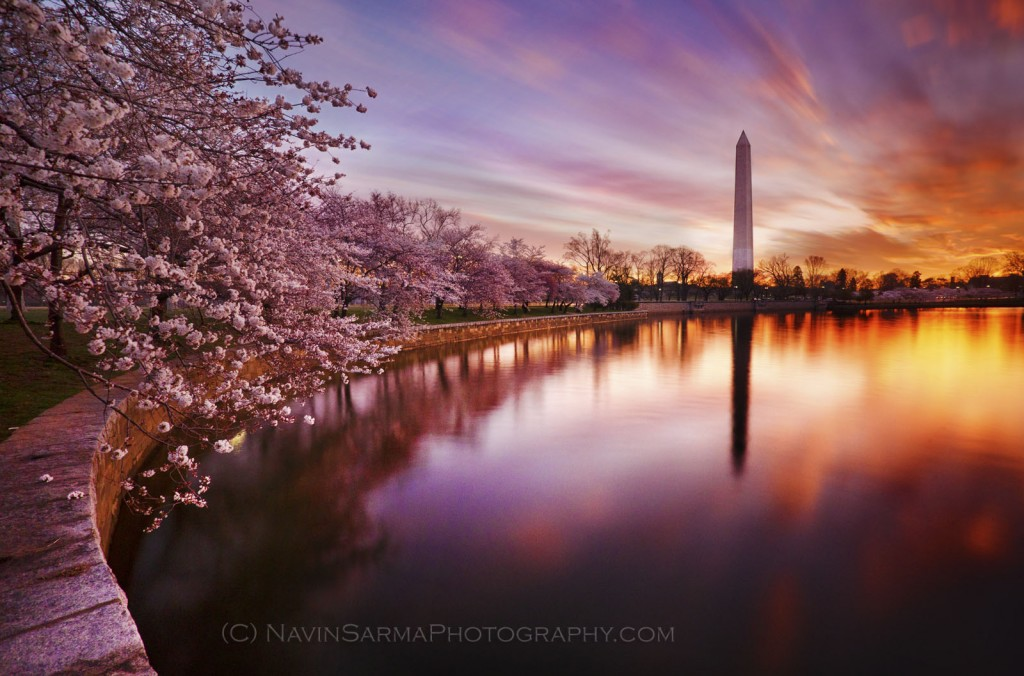 Washington DC Cherry Blossom Wallpaper WallpaperSafari