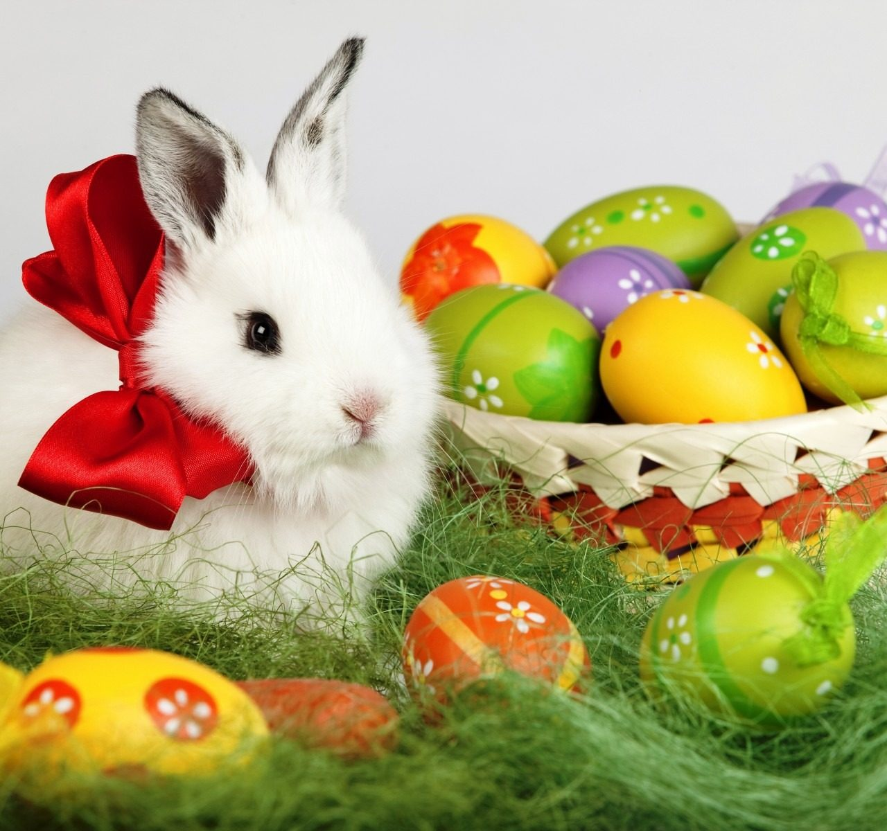 Easter Bunny Rabbit 4K Ultra Hd Pc Wallpaper   HD Wallpapers 1280x1200