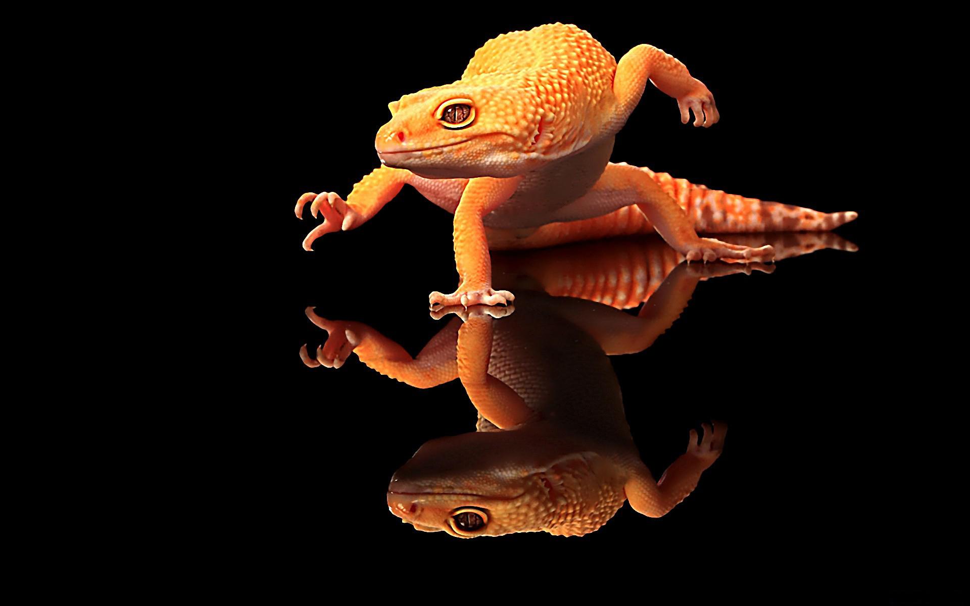 Gecko HD Wallpaper Background Image 1920x1200 ID405014 1920x1200