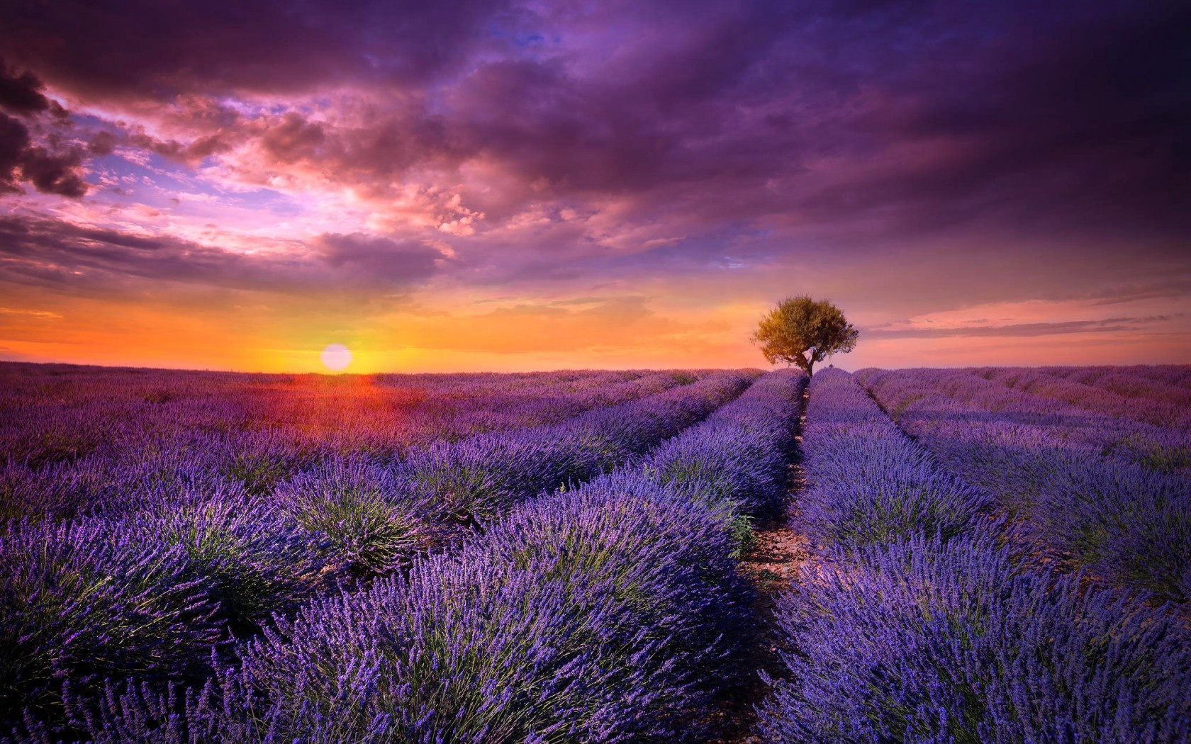 Provence Field Lavender Sunset Wallpapers   1680x1050   779399 1680x1050