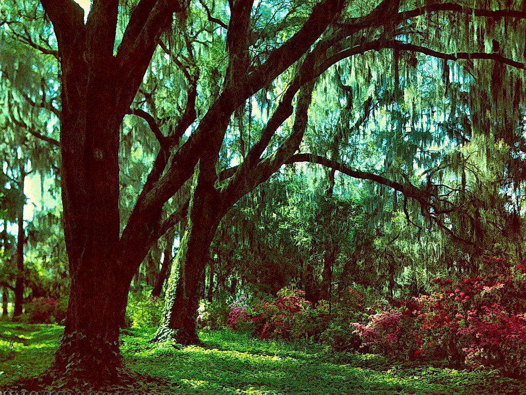 Magnolia Gardens South Carolina Digital Art Wallpaper With A High 1024x768