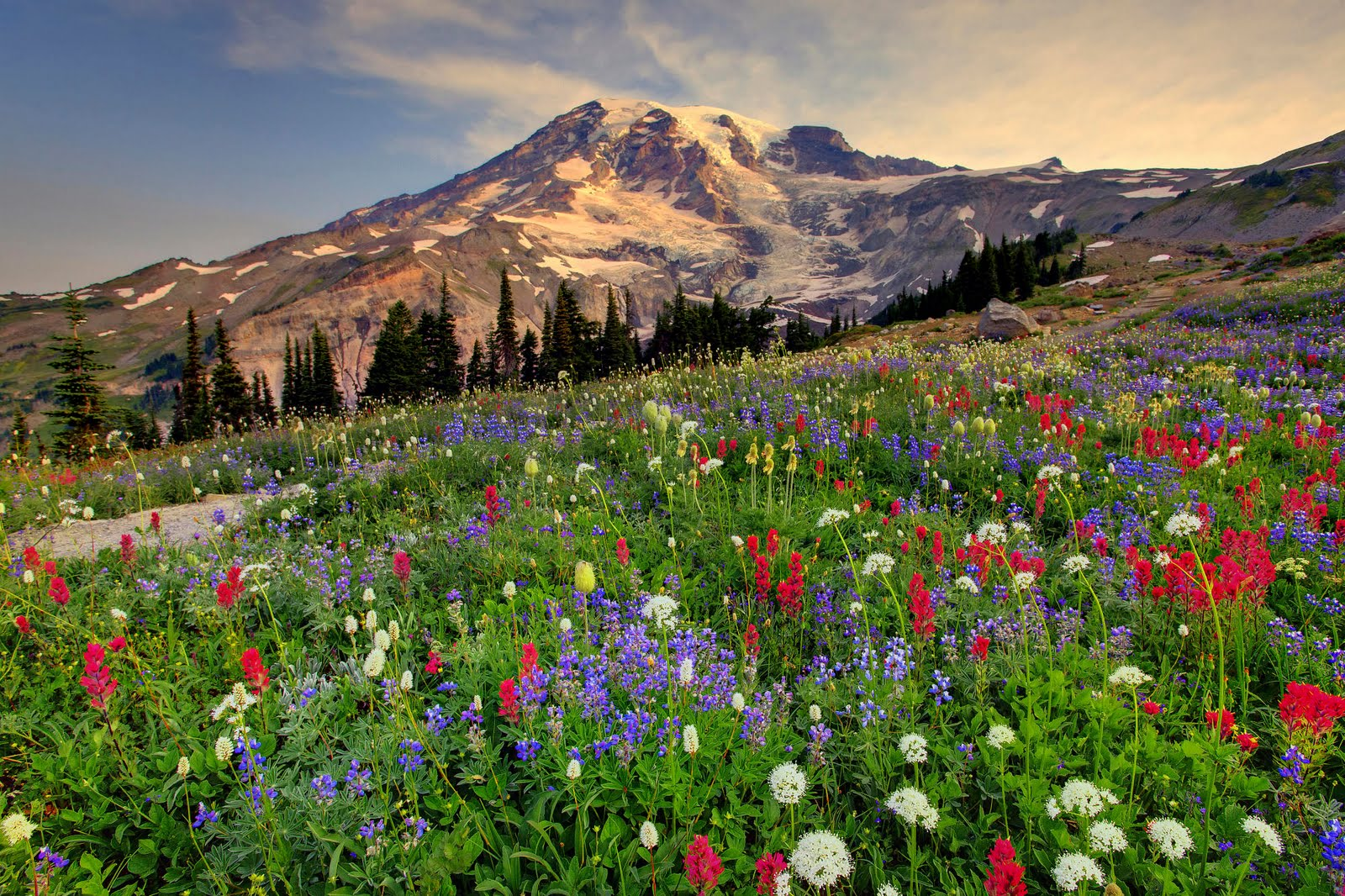 paradise mount rainier HD wallpapers HD HD Wallpaper 1jpg 1600x1066