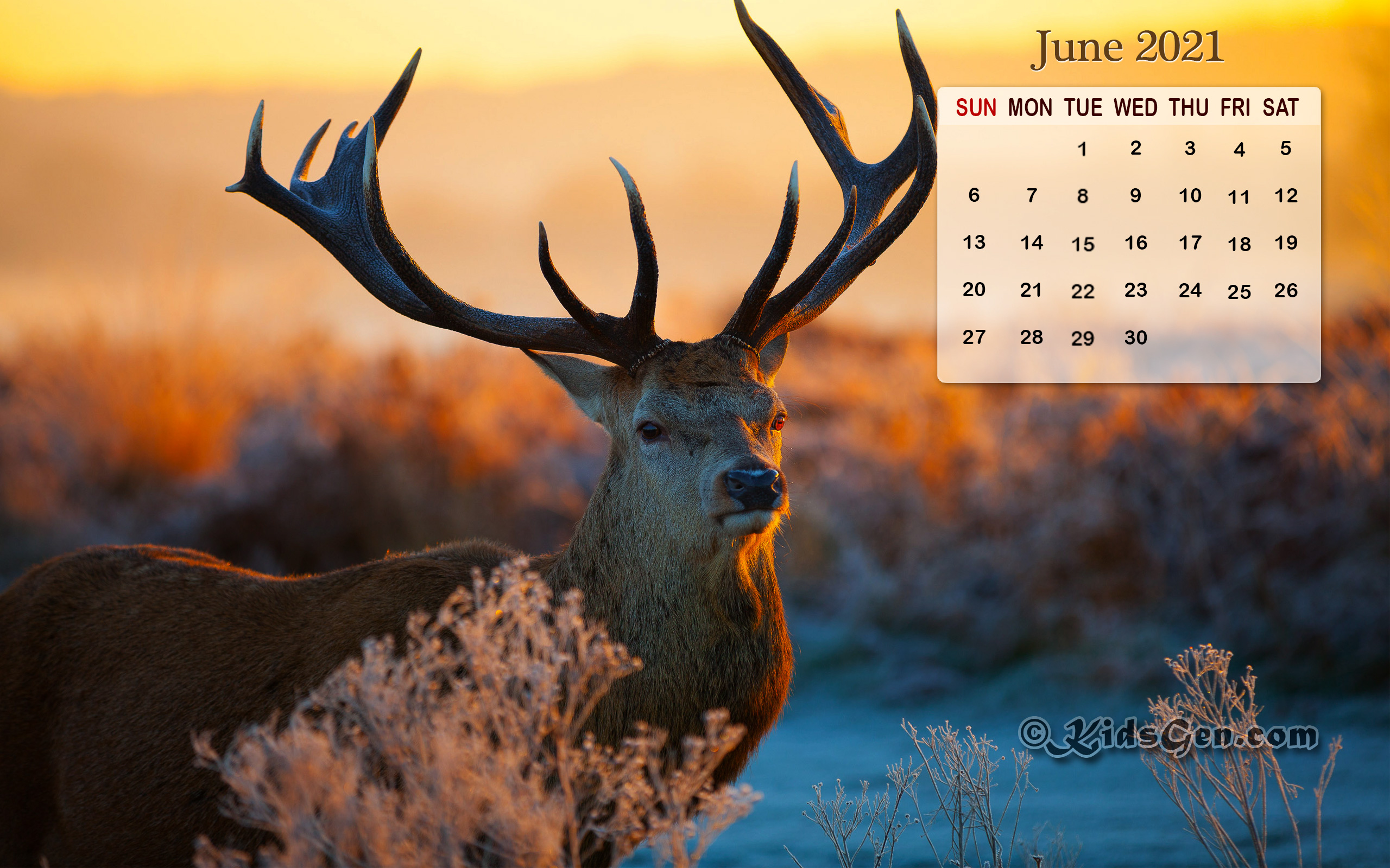 Month wise Calender Wallpapers 2021 HD Calendar Wallpapers 2560x1600