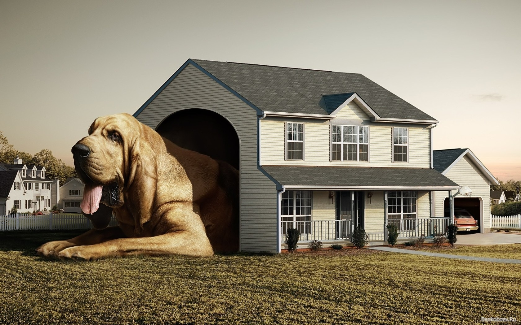 cool dog house best funny wallpapers share this funny wallpaper 1680x1050