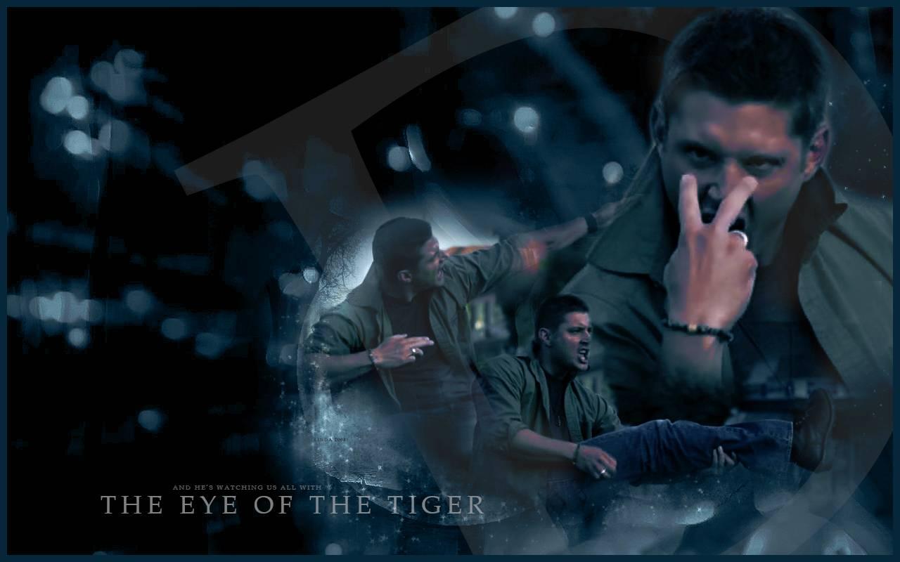 Eye of The Tiger Wallpaper   Supernatural Wallpaper 1280x800
