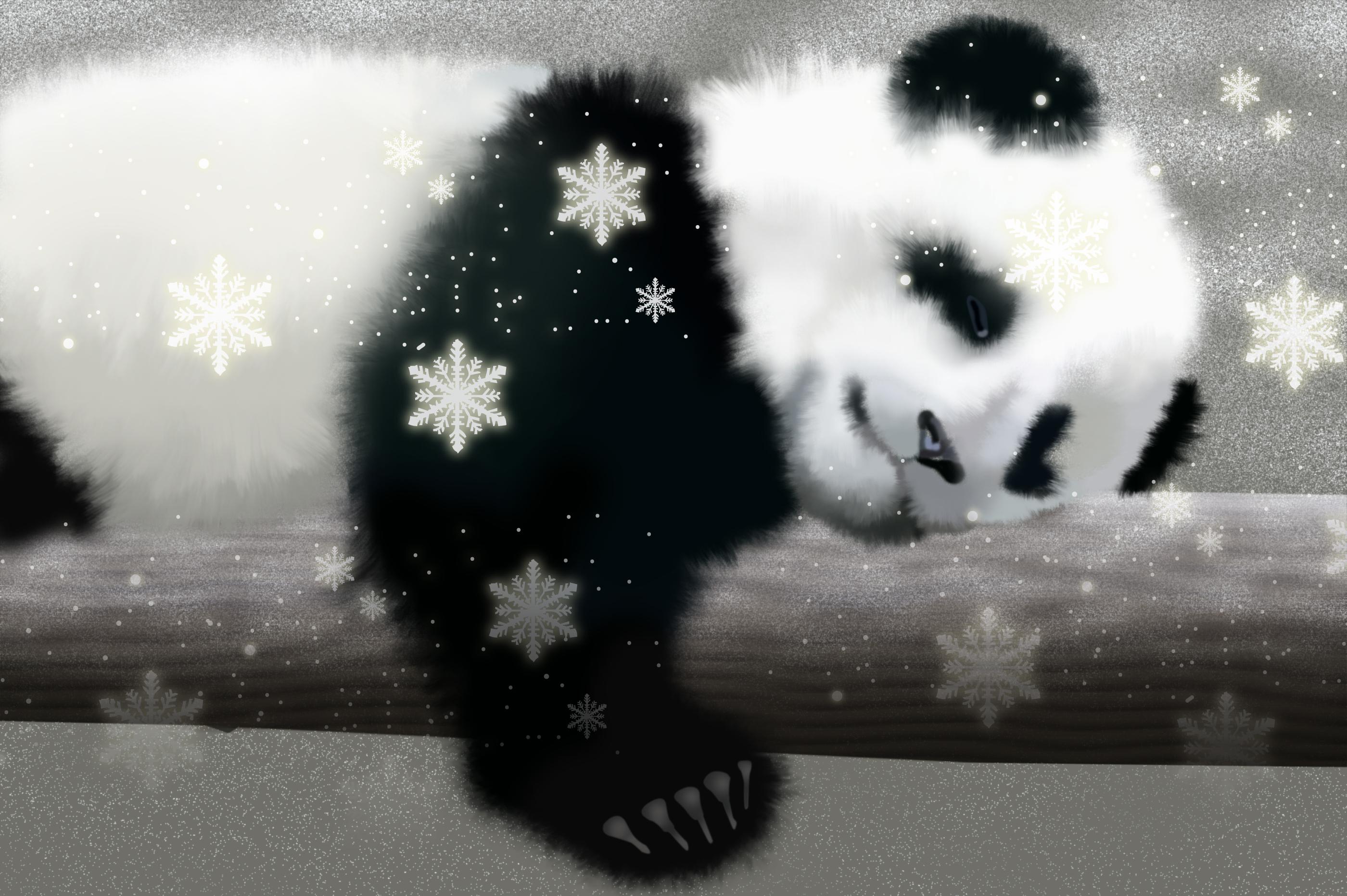 baby panda desktop wallpaper 2800x1863