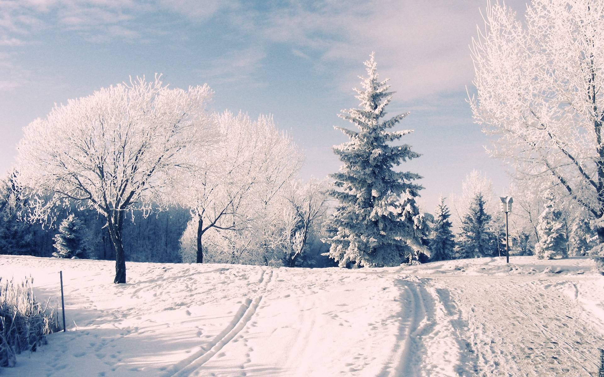 Winter Wonderland Backgrounds 1920x1200
