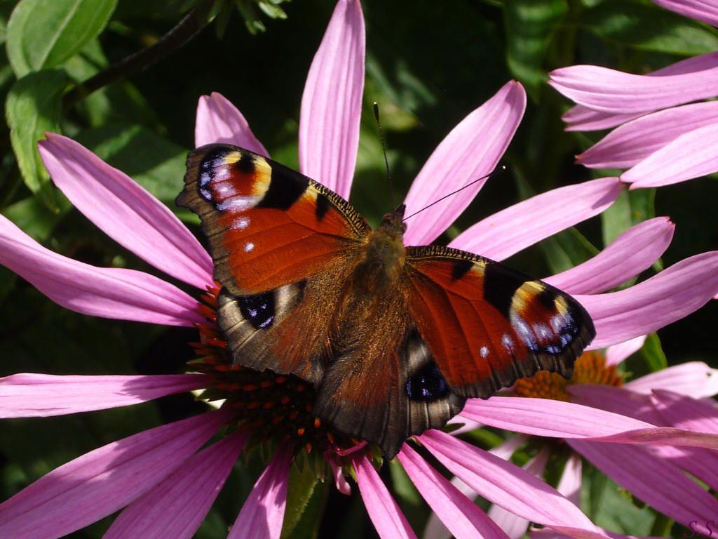 Butterfly   catsparrots and butterflies Wallpaper 22790918 1024x768