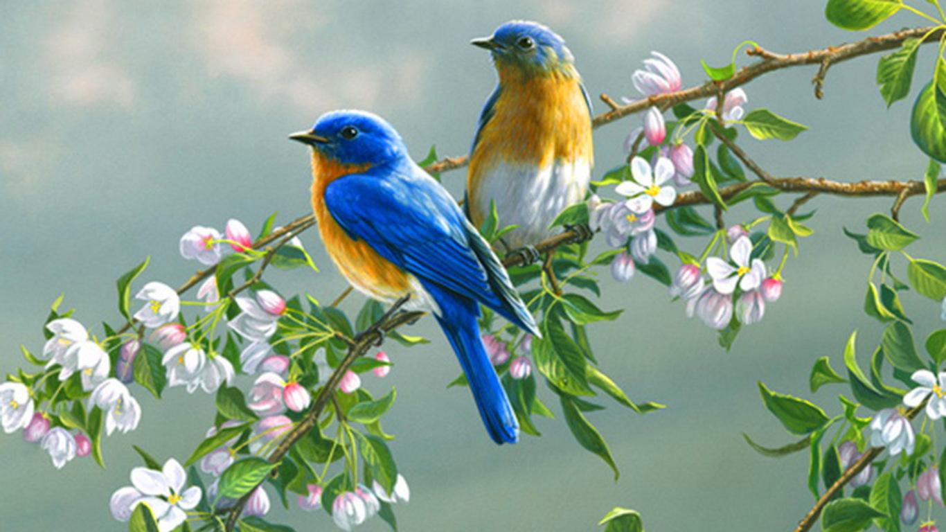SUN SHINES colourful birds wallpaper 1366x768