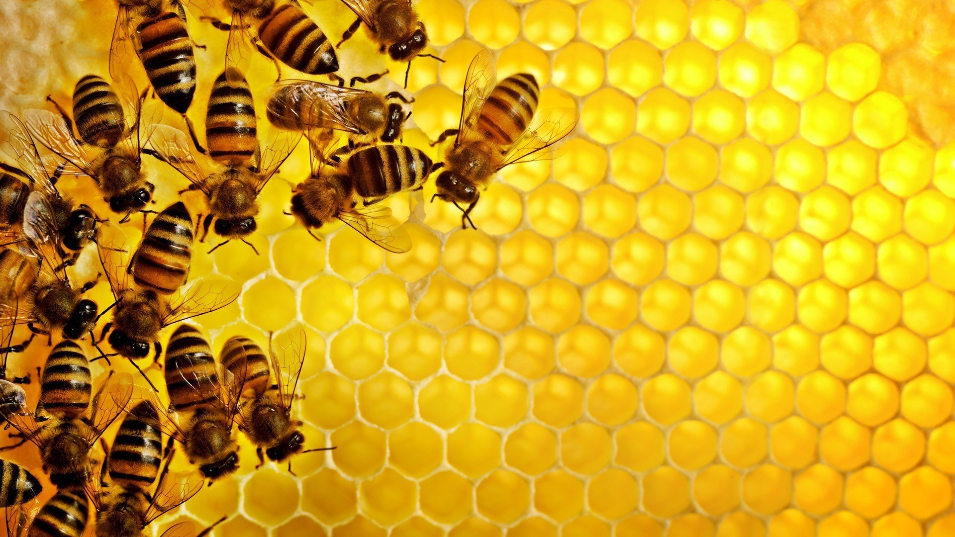 pattern Texture Geometry Hexagon Nature Insect Bees Honey 1920x1080