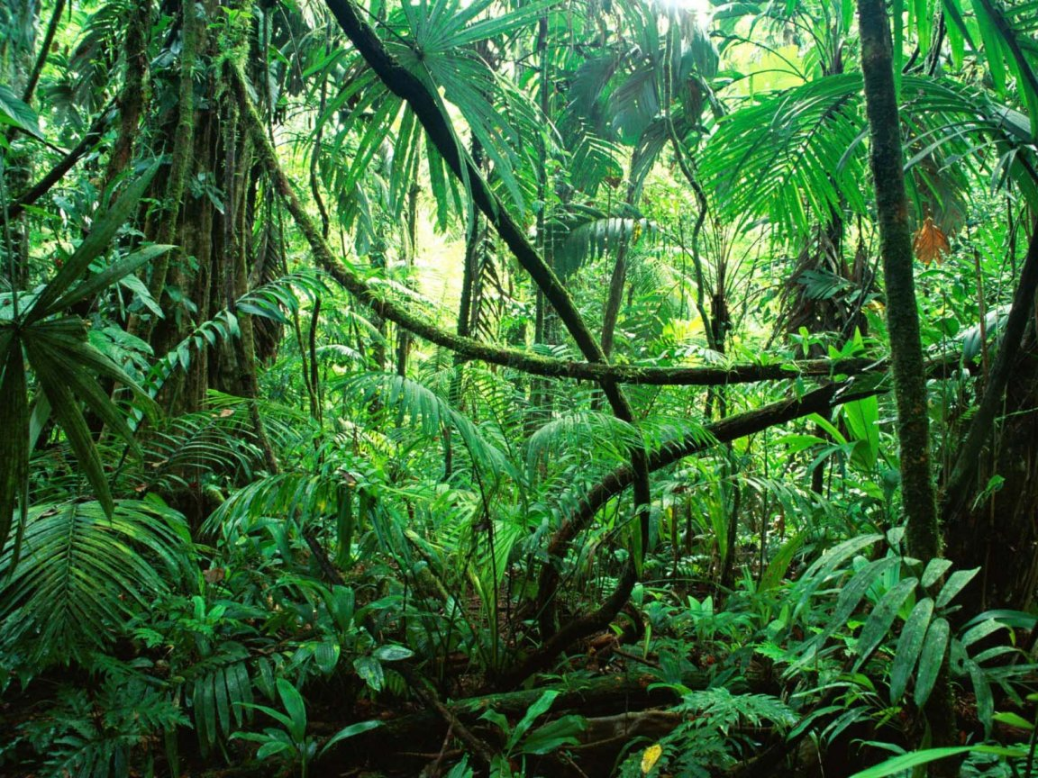 Amazon Forest 1152x864 WallpapersAmazon Forest 1152x864 Wallpapers 1152x864