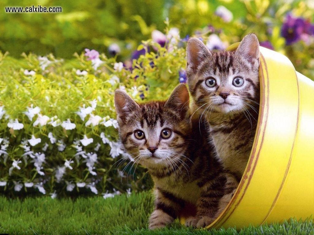 46 kittens and flowers wallpaper on wallpapersafari - Kitten backgrounds ...