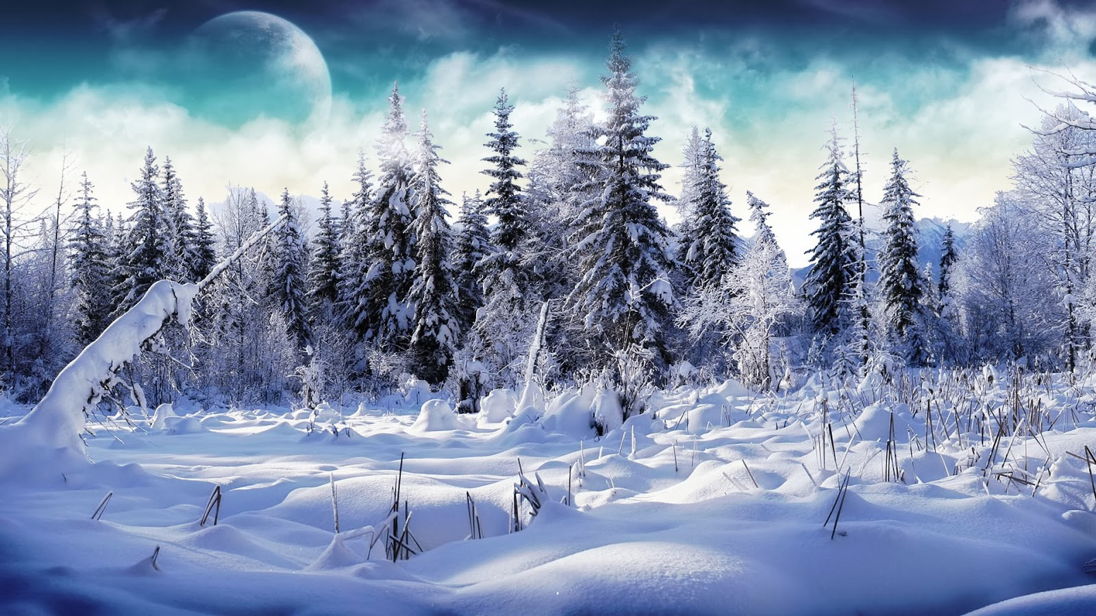 Snow Fall Winter HD Wallpapers   HD Wallpapers Blog 1600x900