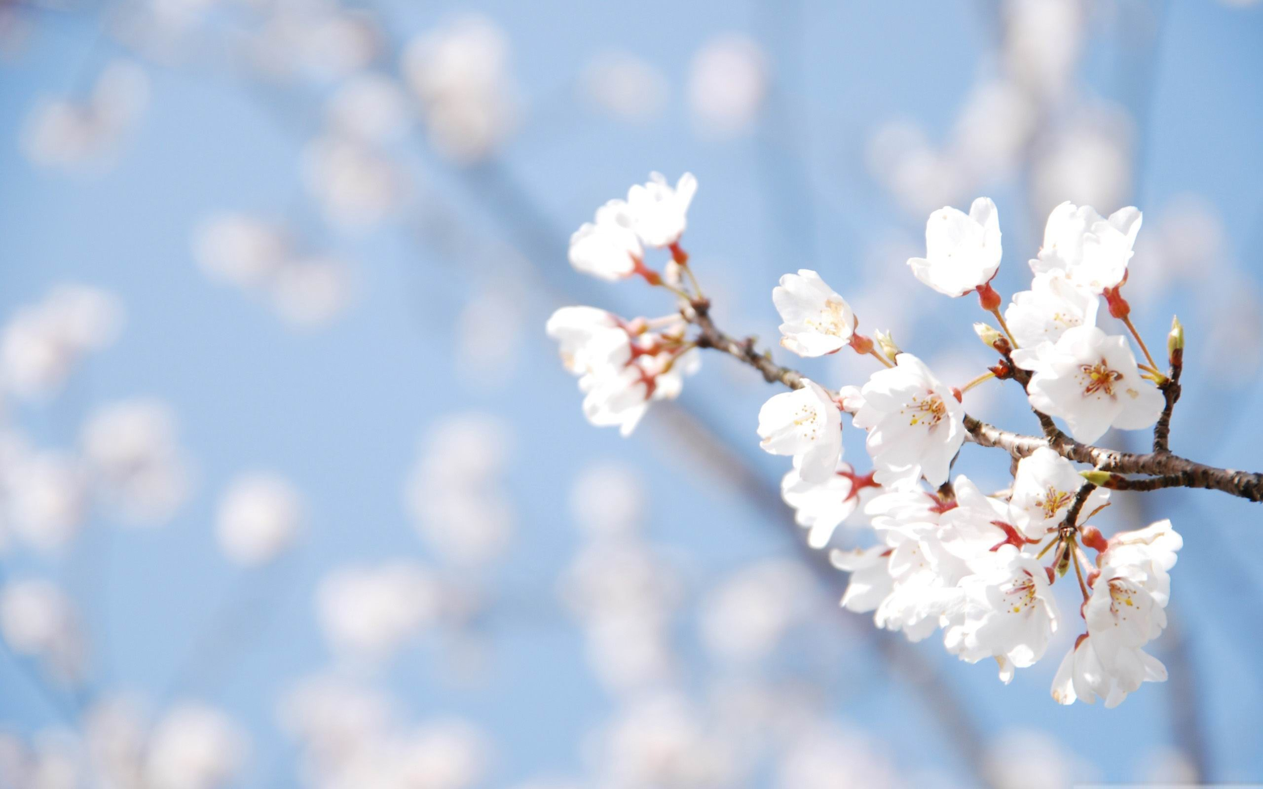 Spring Wallpaper  Desktop 2560x1600