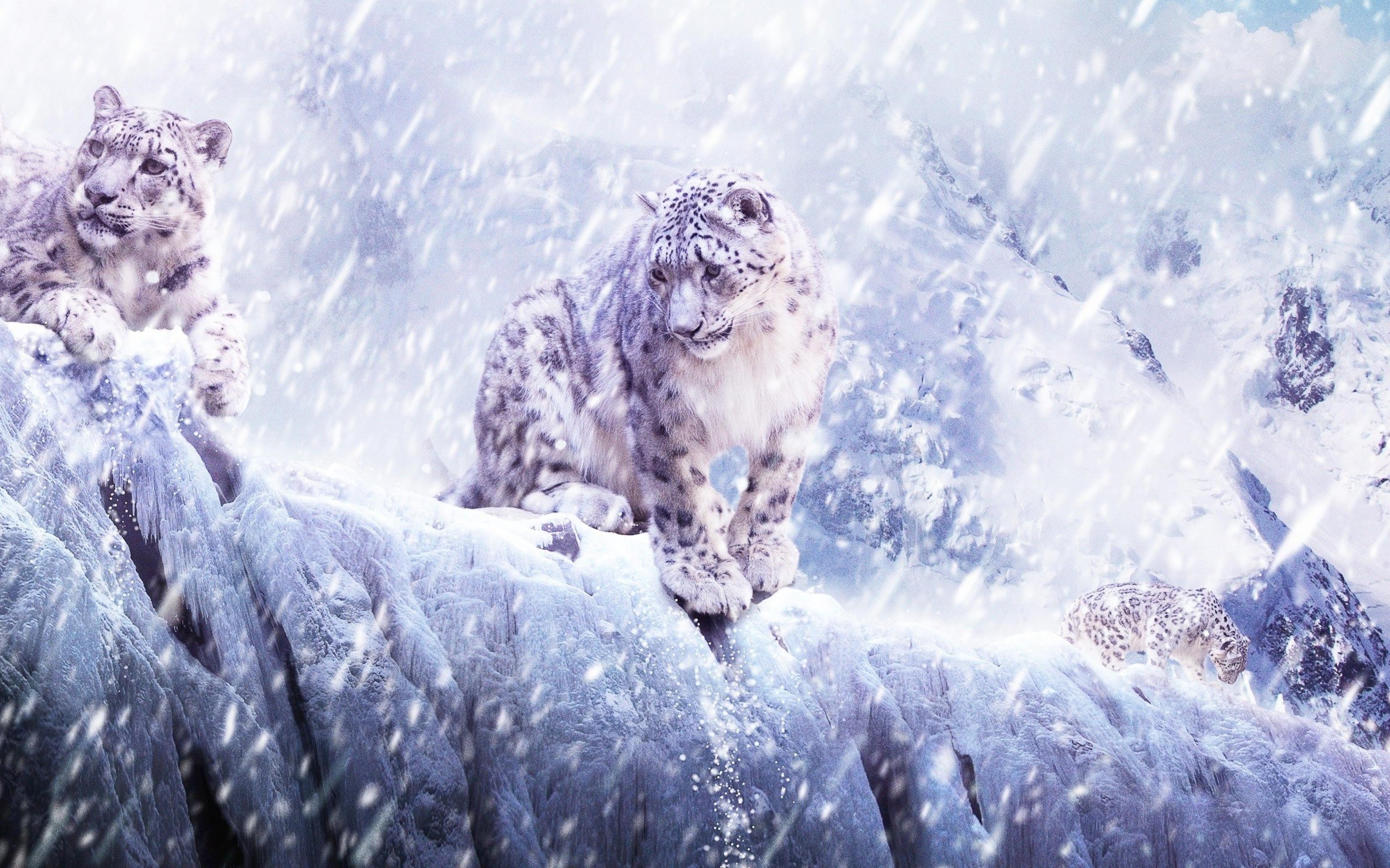Leopard Snow Blizzard Breaking Wallpaper Background Ultra HD 4K 3840x2400