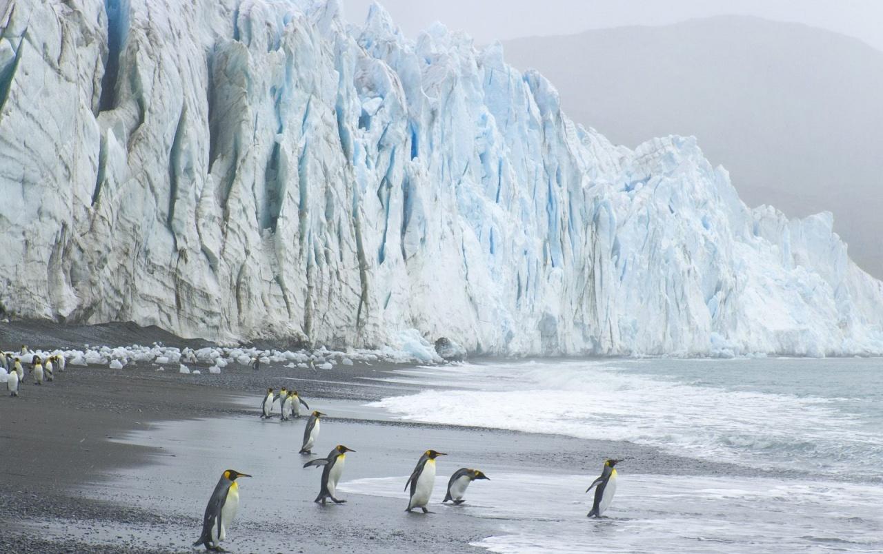 King Penguins wallpapers King Penguins stock photos 1280x804
