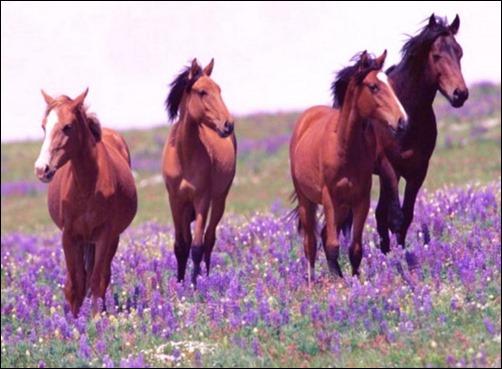 Horse Screen Wallpaper - WallpaperSafari