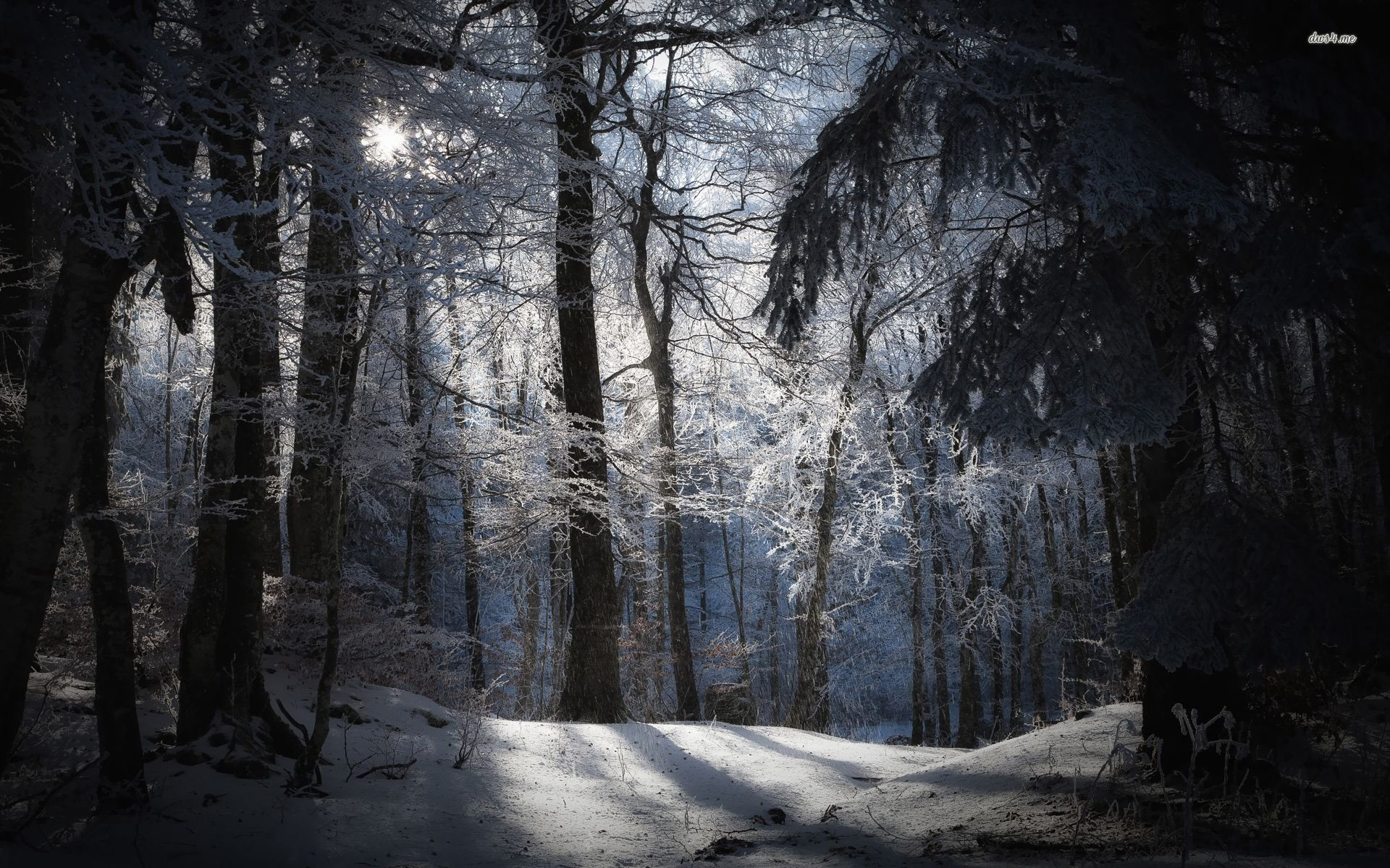 Free Download Sunny Day In The Snowy Forest Wallpaper Nature