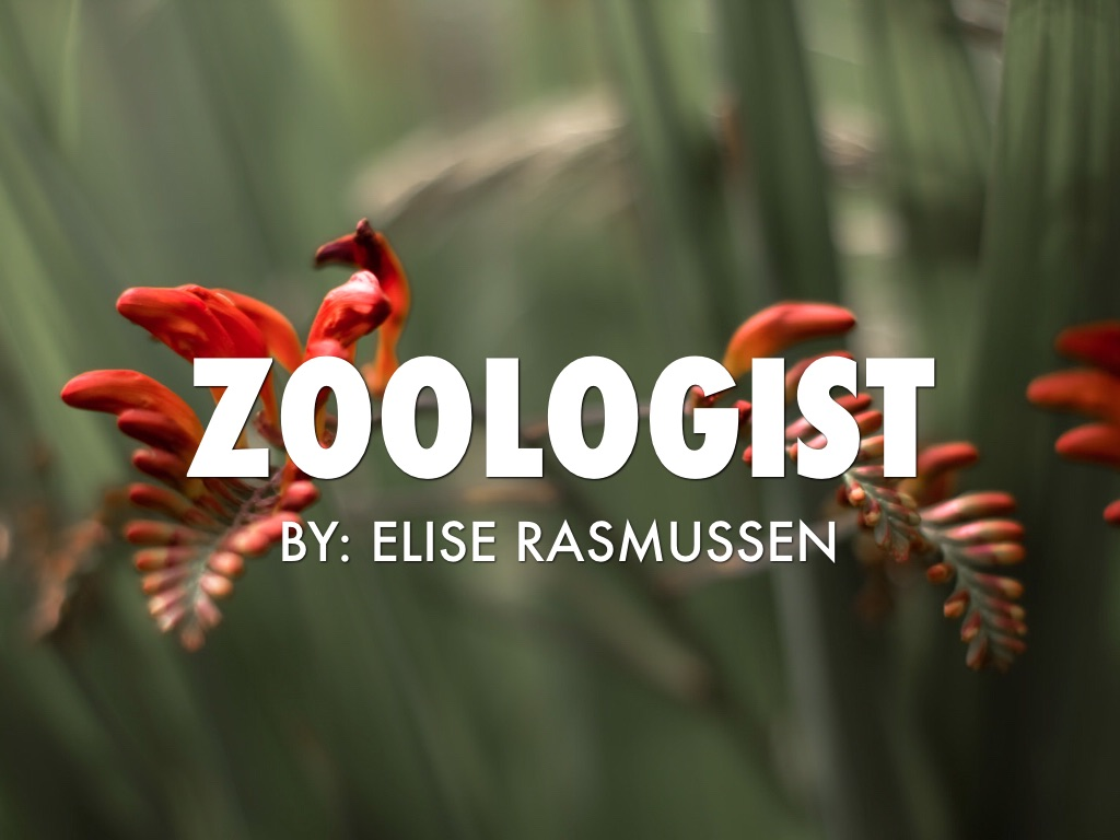 Zoologist by Elise Rasmussen 1024x768