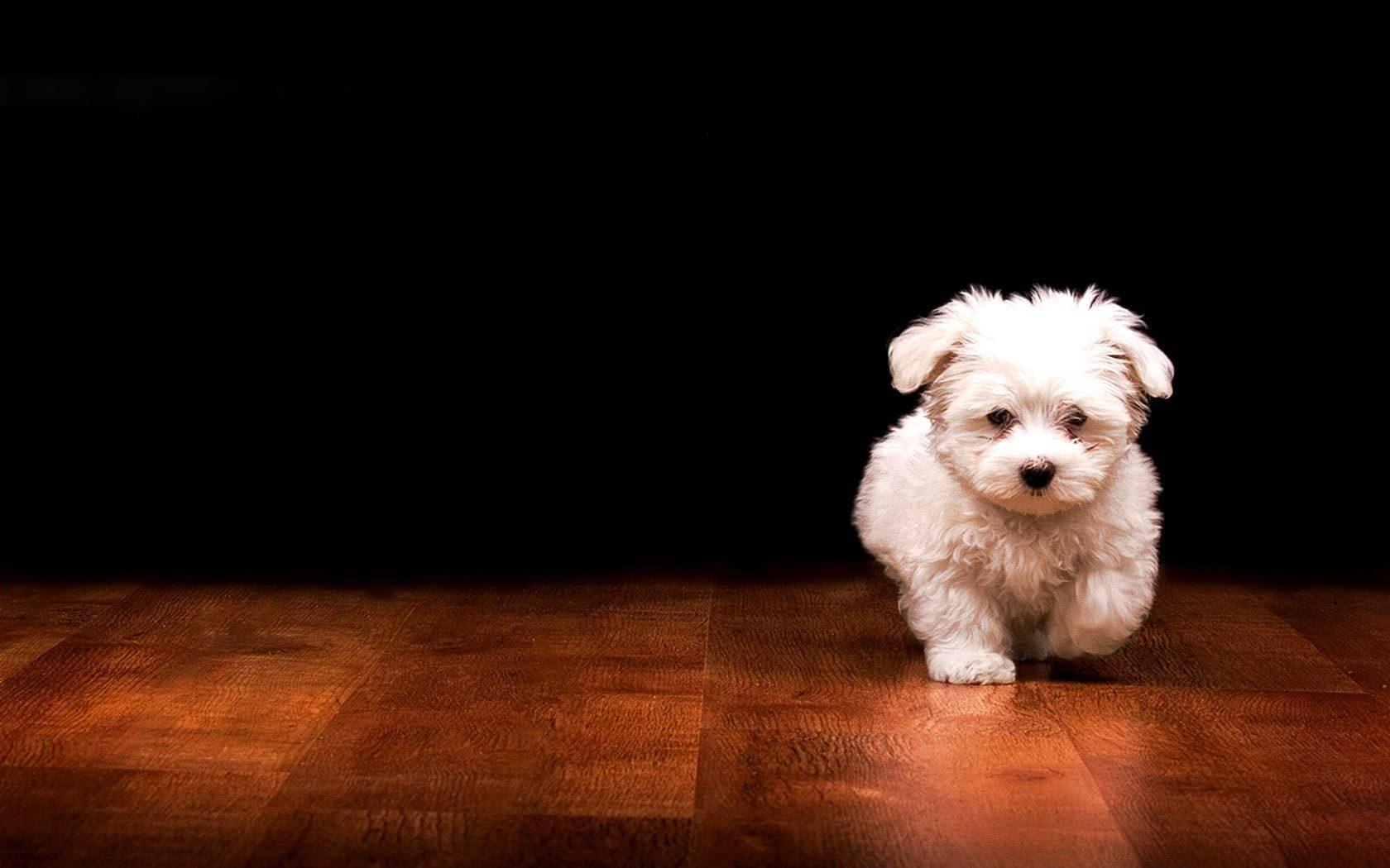 Puppy Dog Wallpaper 10600 Wallpaper Cool Walldiskpapercom 1680x1050