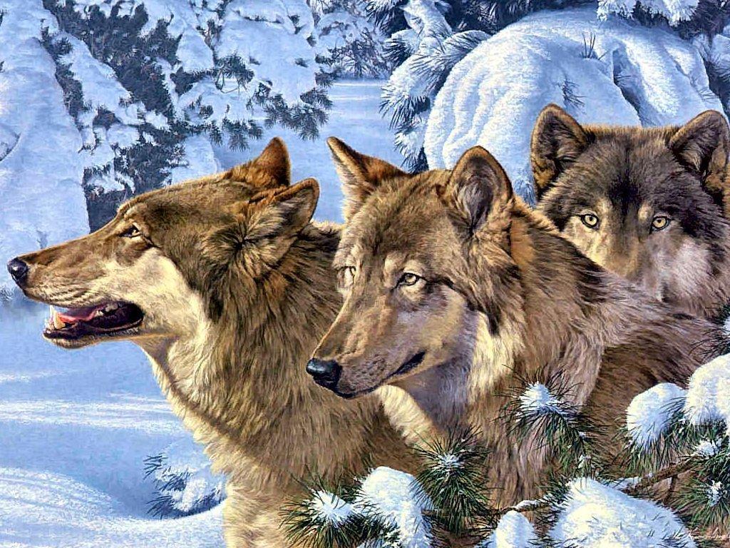 Winter Wolves   Wolves Fan Art 915862 1024x768