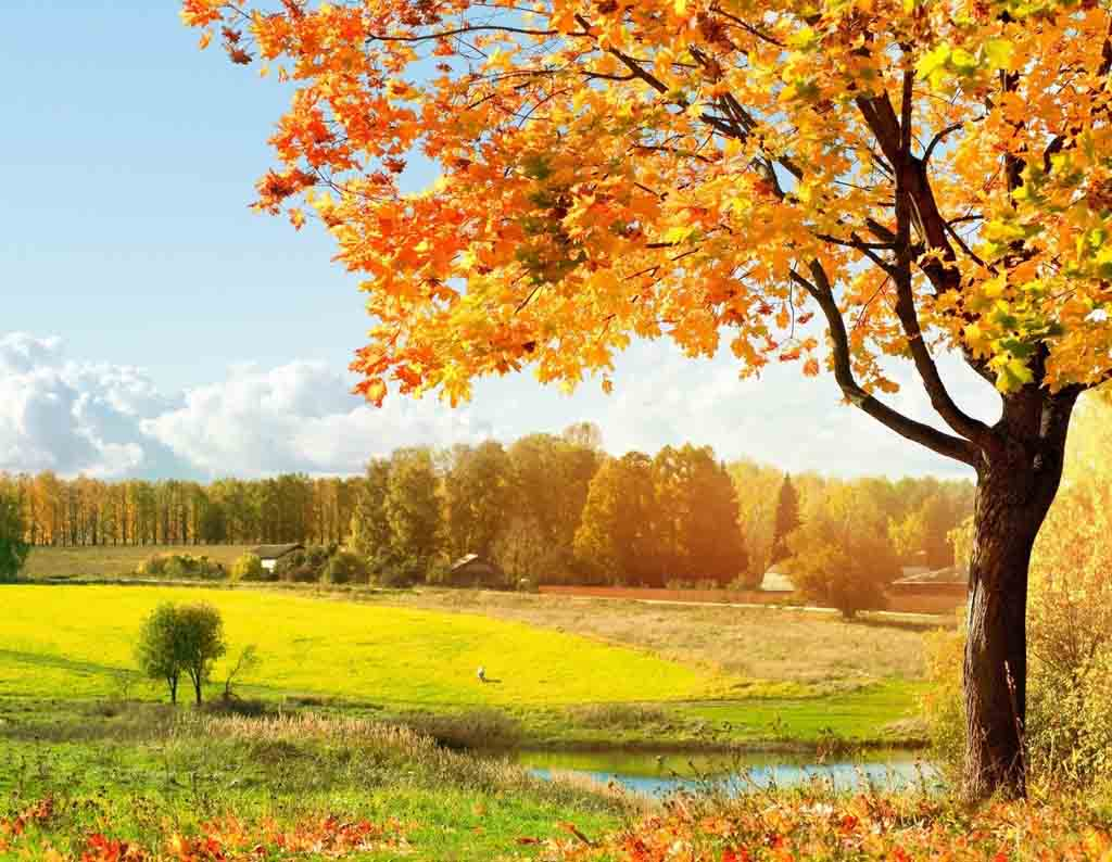 Autumn Desktop Backgrounds Wallpaper ThemesCompany 1024x794