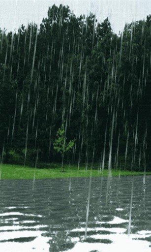 View bigger   Forest Rain Live Wallpaper for Android screenshot 307x512
