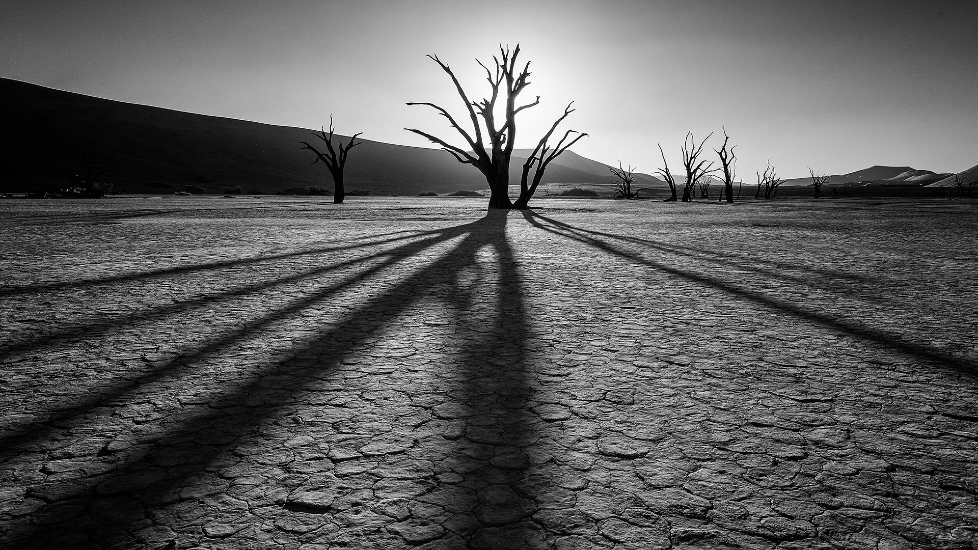 Plants Drought Black and white Wallpaper Background 4K Ultra HD 3840x2160