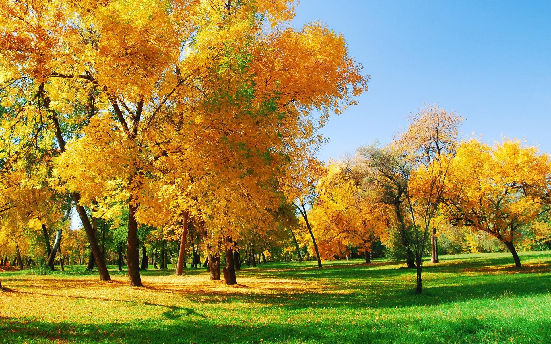 Autumn Park Hd Desktop Wallpaper Coalition of Oregon Land Trusts 1920x1200