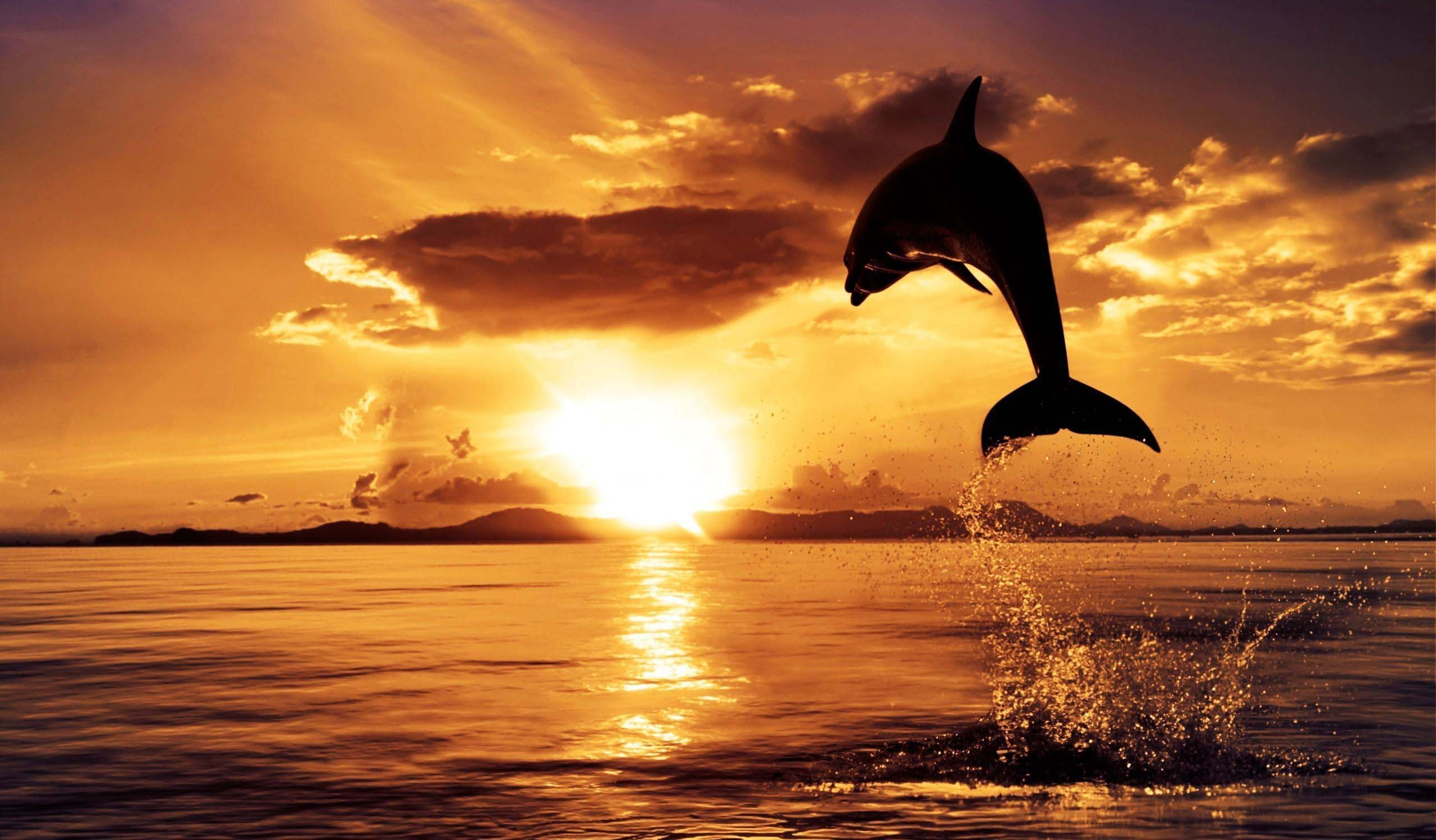 Ocean Sunset Wallpapers Images Photos Pictures Backgrounds 2560x1498
