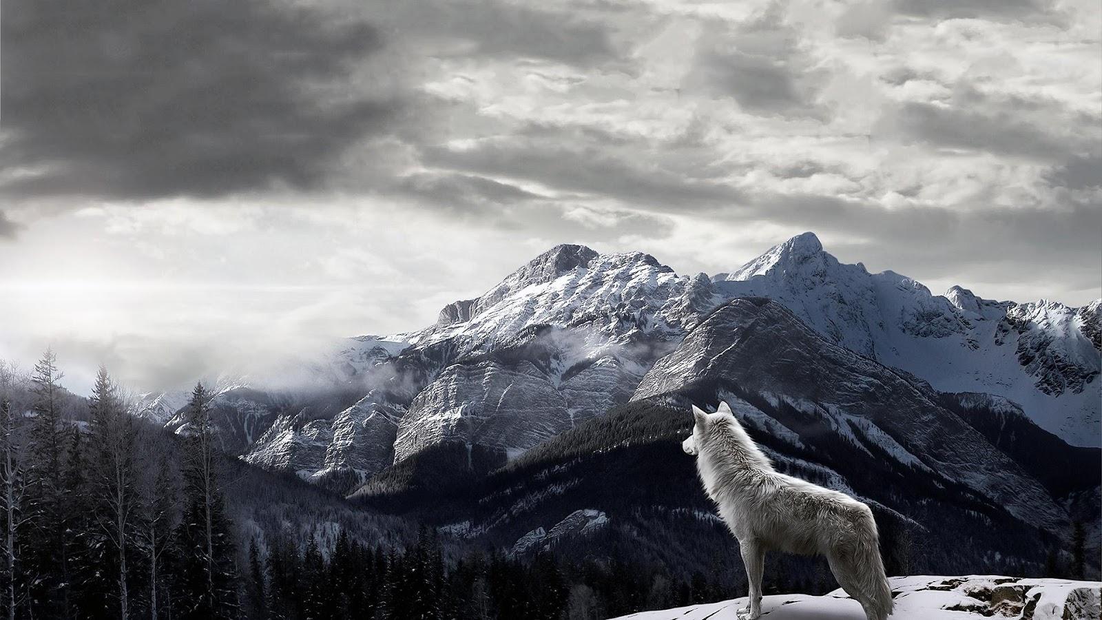 Wolf Wallpaper 9   1600 X 900 stmednet 1600x900