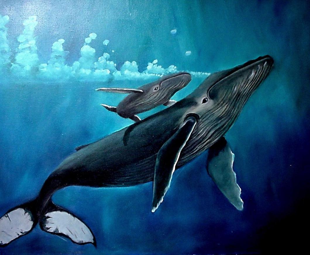 Download Whale Wallpaper 1060x872