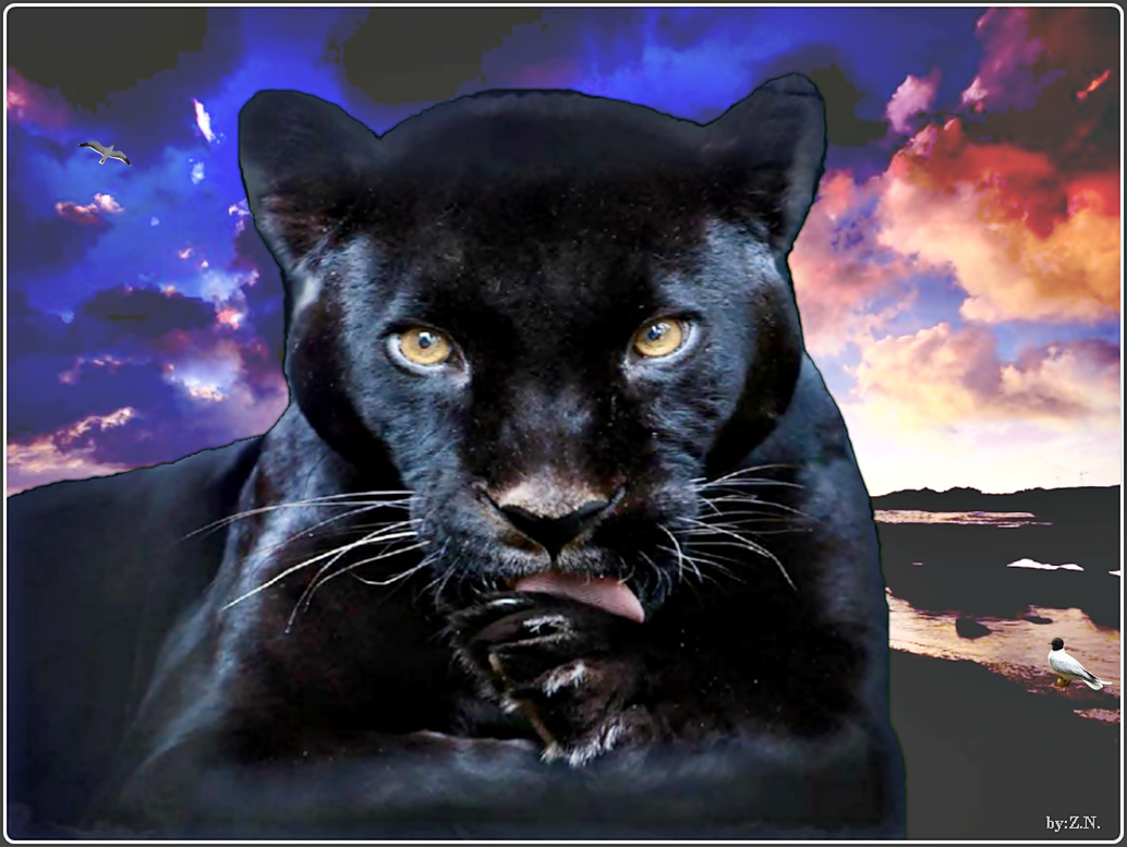 Black Panther Photo   BestePics 1034x777
